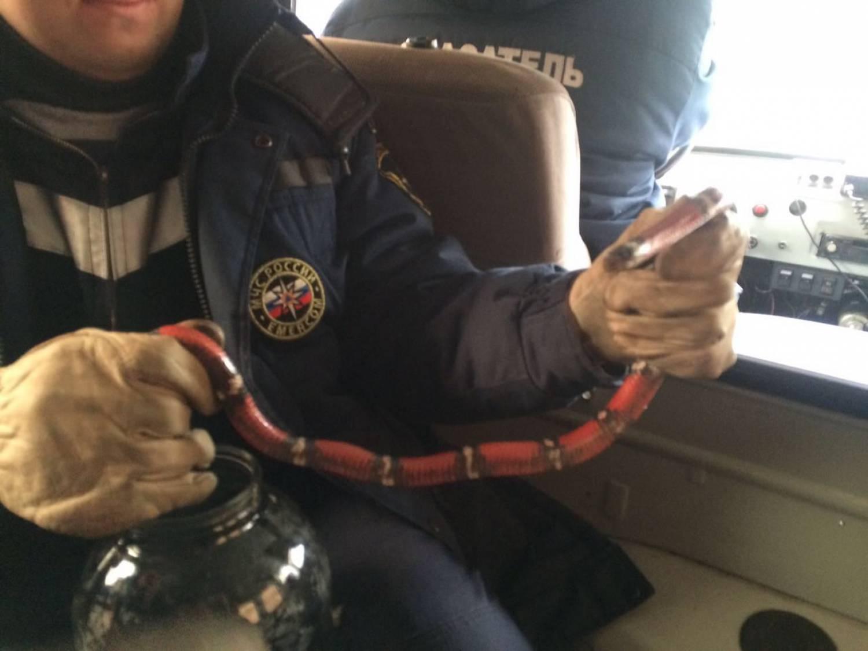 Жительница Казани нашла змею влюстре— МЧС