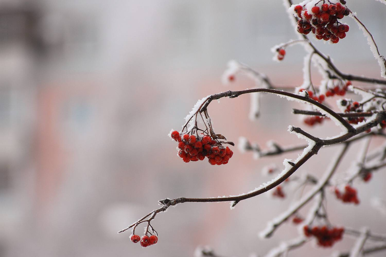 Зима... © Михаил Захаров